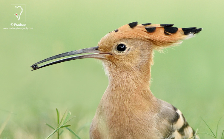 09-The-Most-Useful-Bird-Photography-Tips-for-Beginners-by-Prathap-Nature-Photography-Simplified