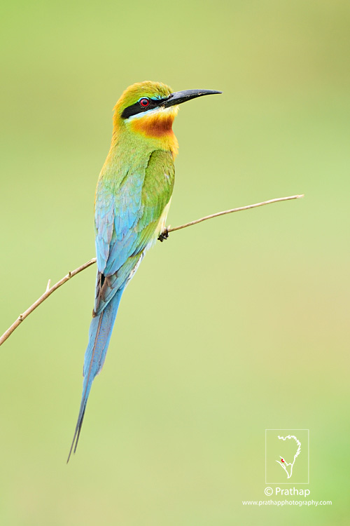 19-The-Most-Useful-Bird-Photography-Tips-for-Beginners-by-Prathap-Nature-Photography-Simplified