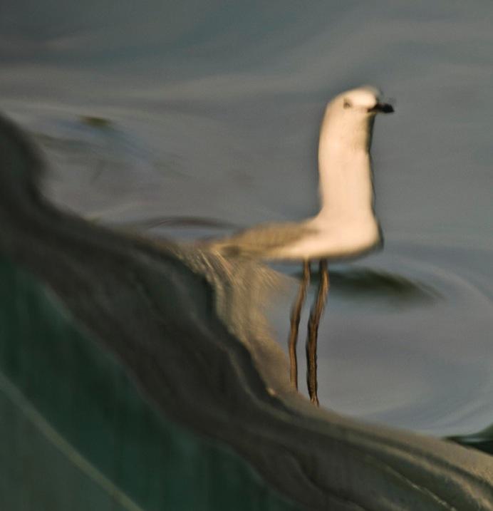 2 Reflection Seagull by Eva Polak