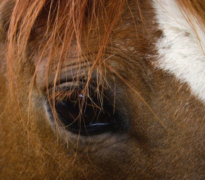 Equine-photography-11