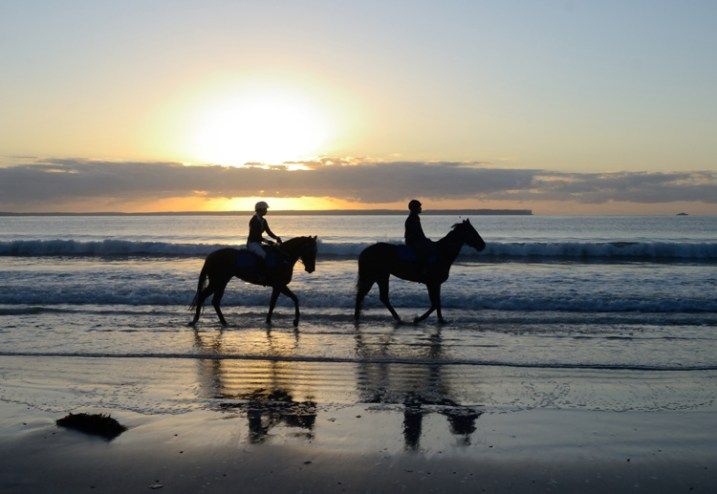 Equine-photography-2