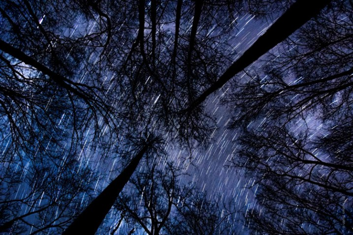 Startrail Trees
