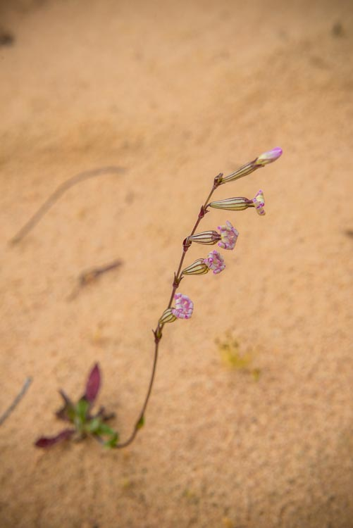 leanne-cole-ten-tips-landscape-7351