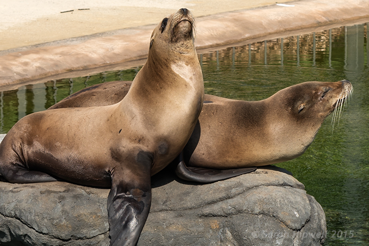 seals-cropped