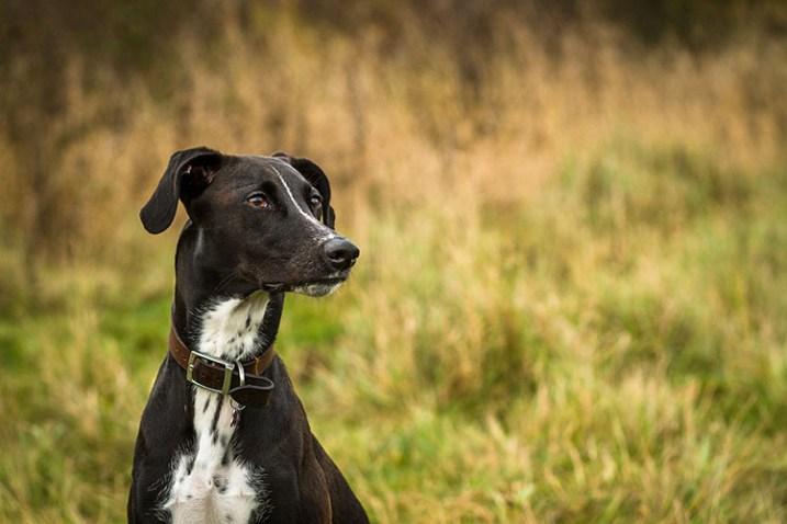 pet-photography-to-improve-camera-skills-9914