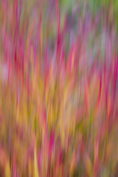 An abstract blur of Fireweed, Fairbanks, Alaska, in autumn.