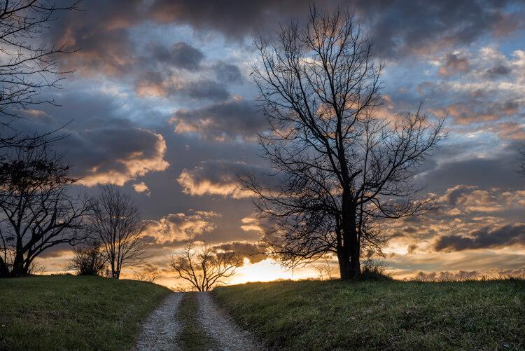 Bare trees at sunrise