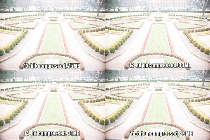 raw-formats-compared-garden-overexposure-compared