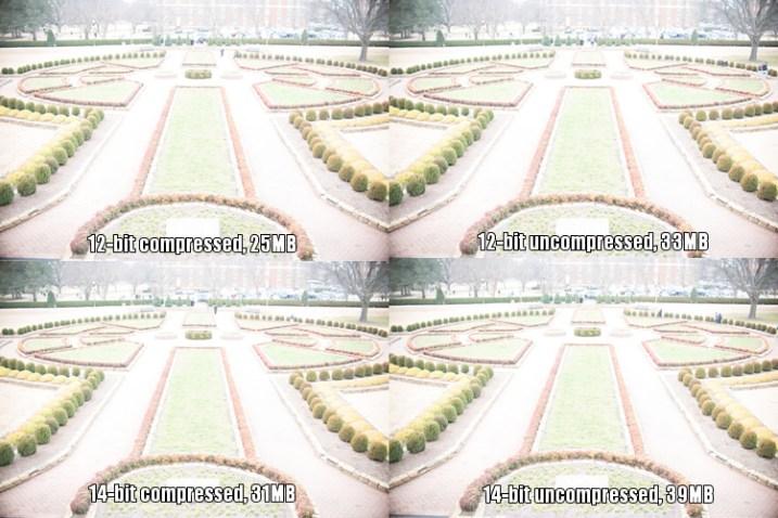 raw-formats-compared-garden-overexposure-compared