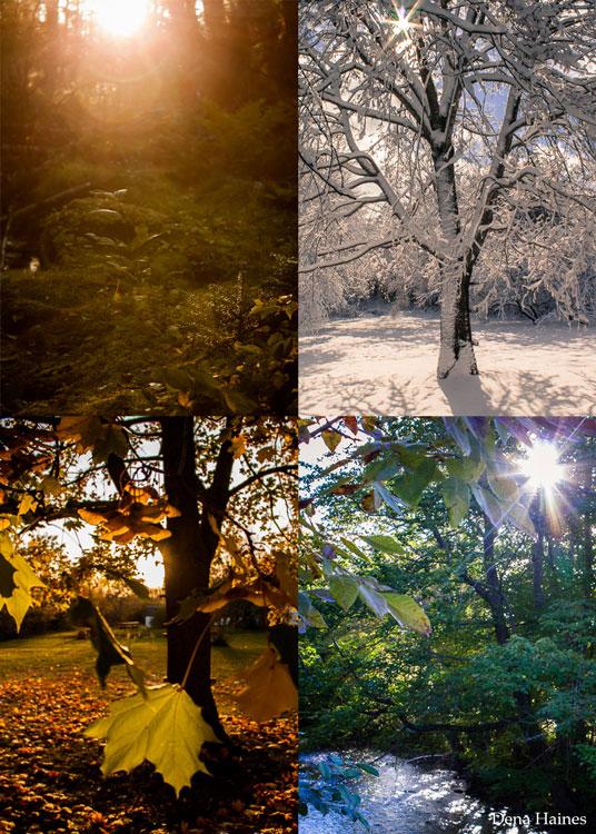 imagens tiradas em diferentes horas do dia
