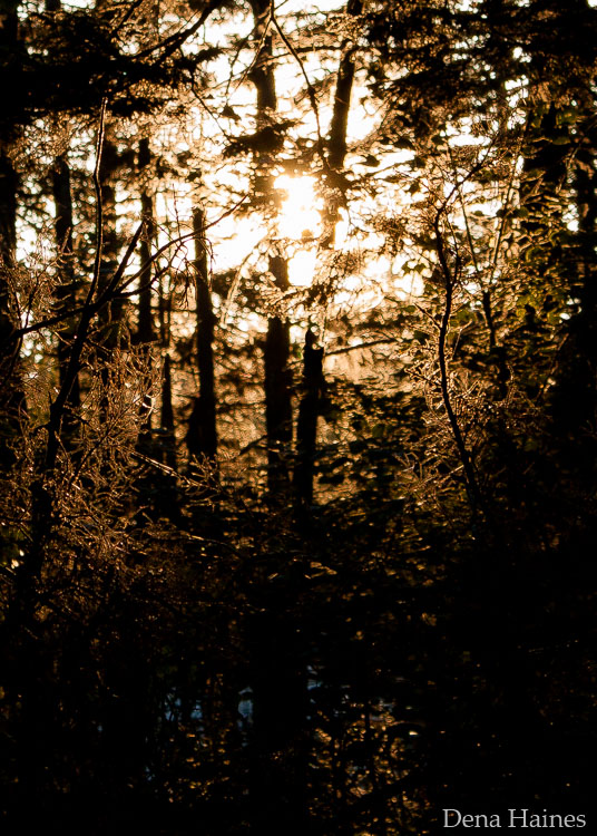 sun flare in forest