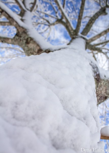 tips for photographing snow