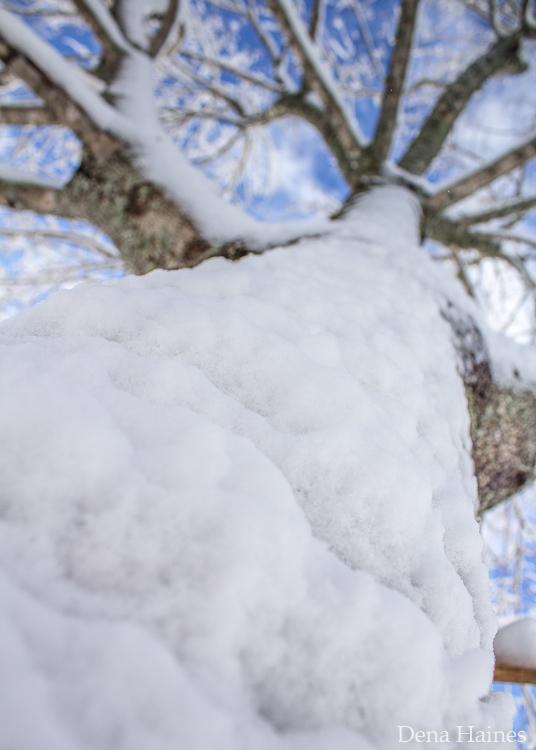 dicas para fotografar neve