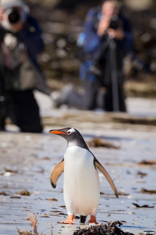 Falklands-2Jan10-CarcassIsl-114