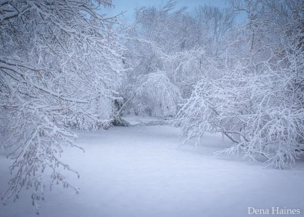 13 dicas para fotografar neve: um guia para iniciantes