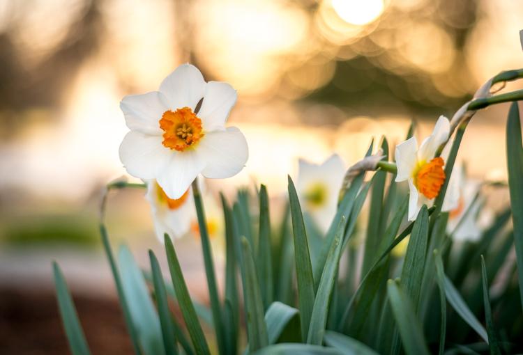 understanding-bokeh-flowers-sunrise