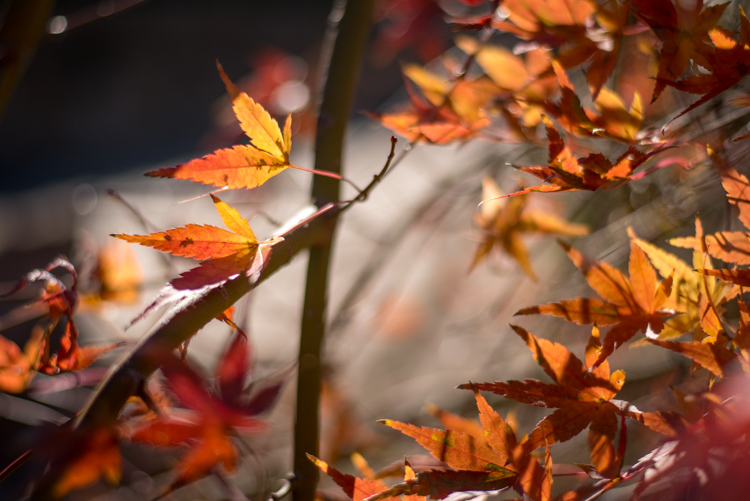 understanding-bokeh-leaves
