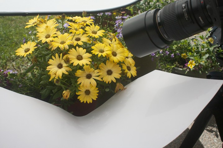 Photograph-Flowers-reflector-above-and-below