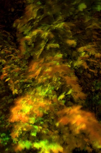 Autumn leaves in motion