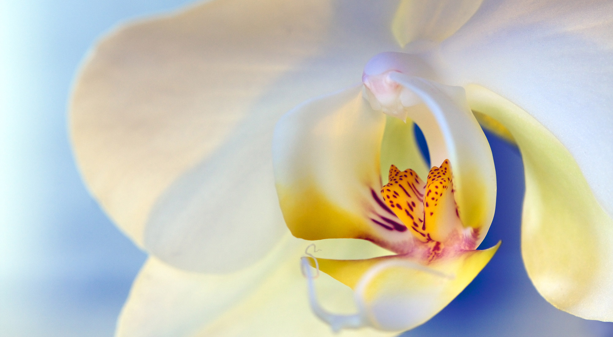 How to Create Gorgeous Flower Images using a Flashlight and a Reflector