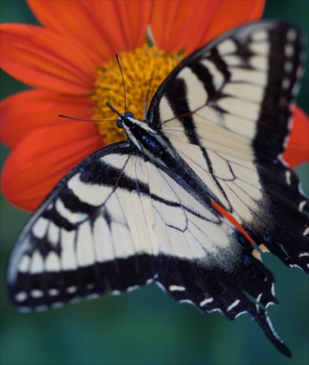 How-to-shoot-butterflies1