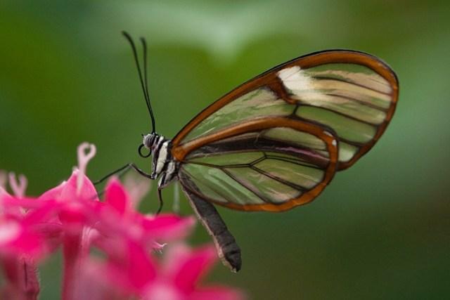 how-to-photograph-butterflies4