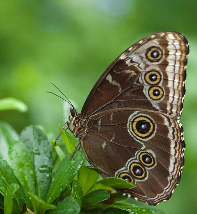how-to-photograph-butterflies5
