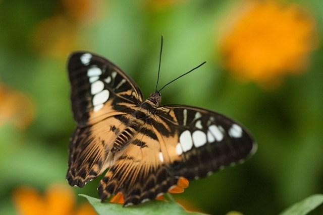 how-to-photograph-butterflies7