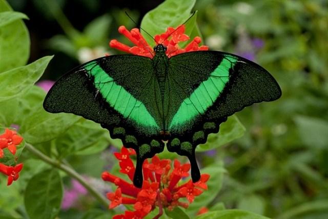 how-to-photograph-butterflies8