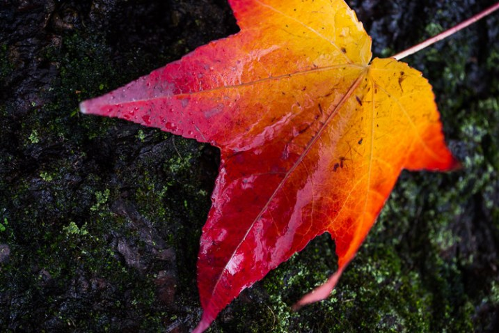 photographing nature in your backyard