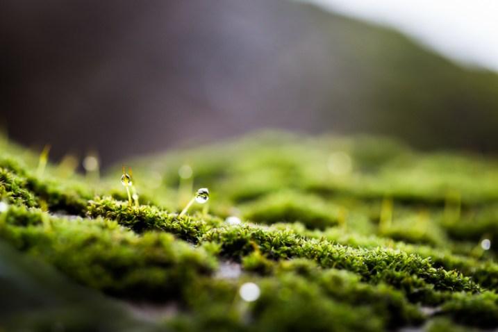 fotografando a natureza no musgo do seu quintal