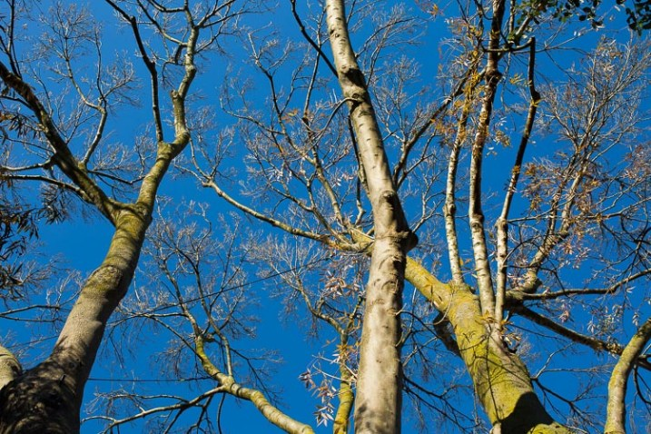 photographing nature in your backyard tree