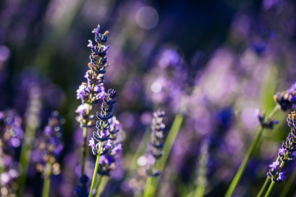 10 Ideas for Photographing Nature in your Backyard
