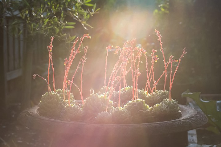 photographing nature in your backyard sun flare