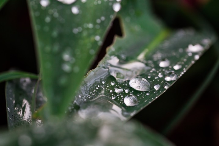 fotografe a natureza em folhas de artrópodes no seu quintal