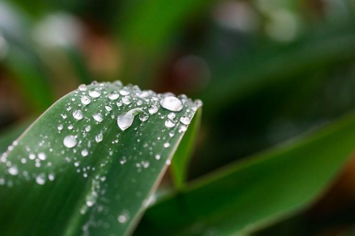 fotografando a natureza nas gotas de chuva do seu quintal