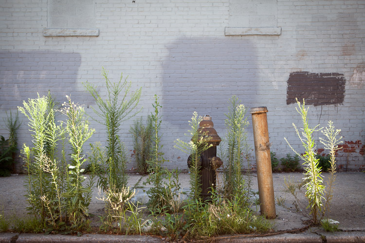 Gowanus, Brooklyn.
