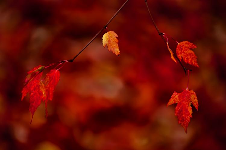 3 fall leaves 1376