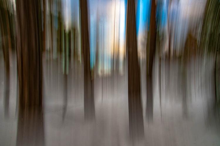 ICM_forest_original_edit