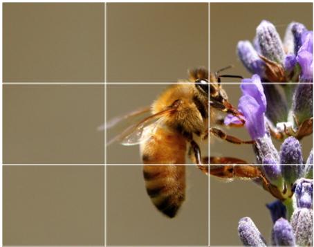 www.digital-photography-school.com