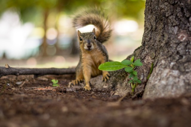 lightroom-adjustments-panel-squirrel