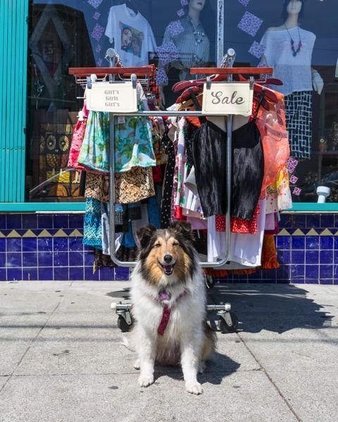 Take Your Dog on Photography Walks 9