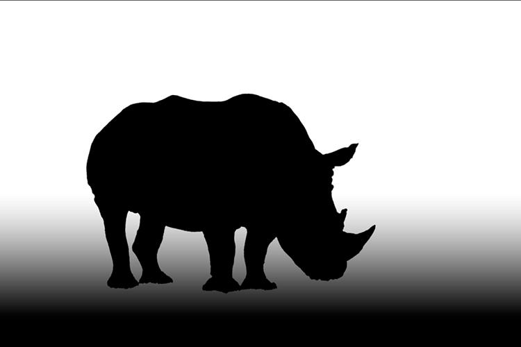 alpha-channel-for-rhino-photo