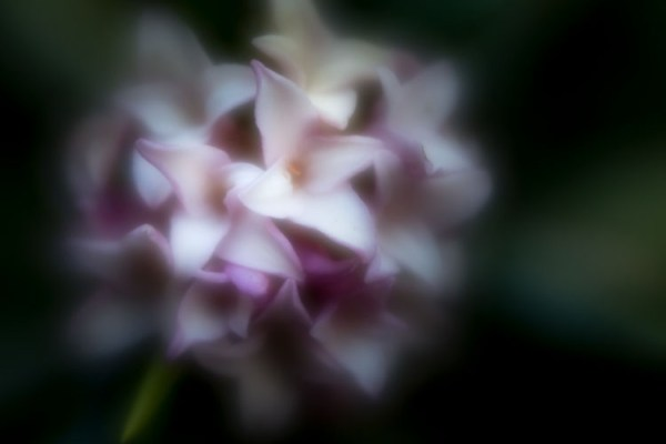 What's special about the Lensbaby Velvet 56 and is it for you?
