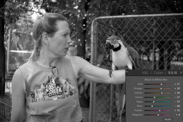 lightroom-adjustments-panel-macaw-bw-all-1