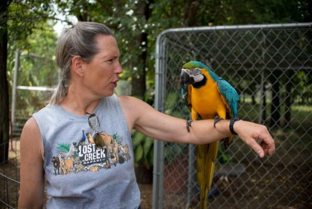 lightroom-adjustments-panel-macaw-color