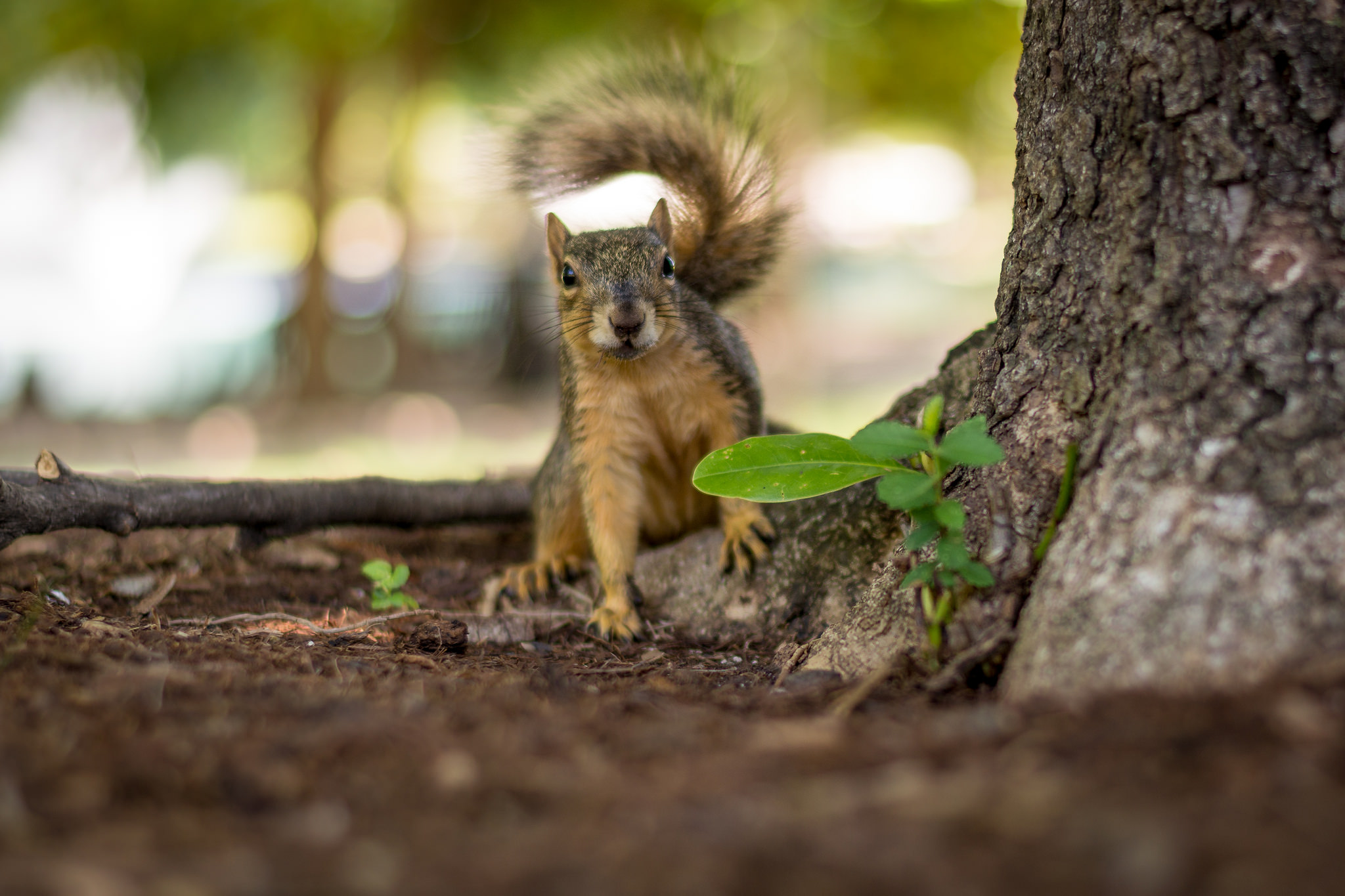This jittery squirrel was moving all over the place, so I shot with a speed of 1/180 second to get a sharp picture. tips for getting tack sharp photos