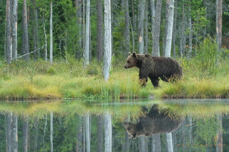 urso no meio ambiente