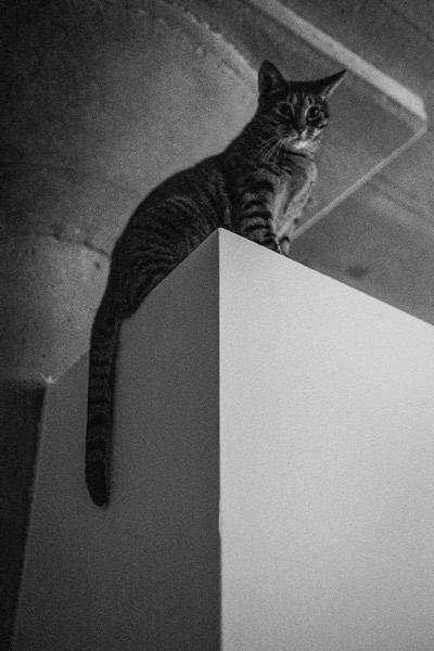 Look feel black white film Lightroom04