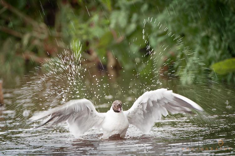 action-wildlife-photos-7